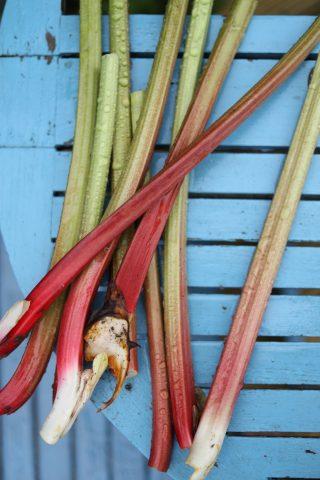 Compote de rhubarbe grillée